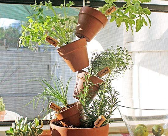 Fűszernövények a lakásban hely- és költséghatékonyan